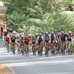 BDO Tour of Northland